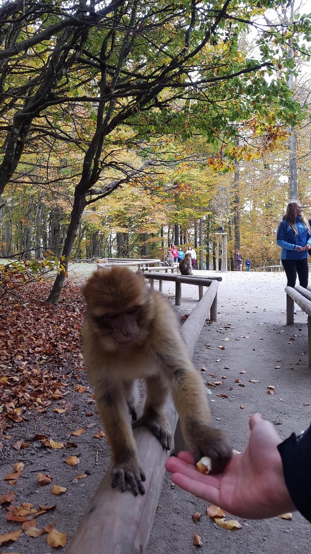 dagtrip trip uitje naar apen in zoo dierentuin